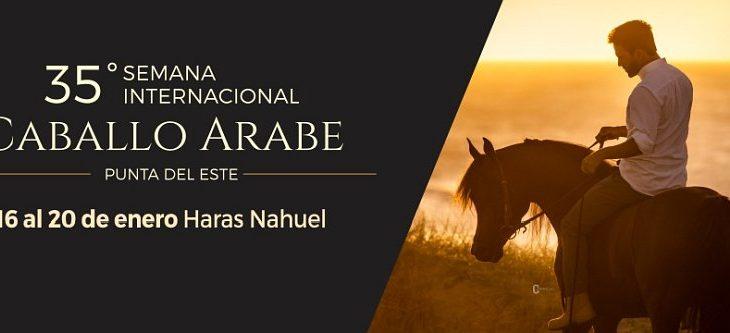 Resultados Semana Internacional del Caballo Árabe 2019
