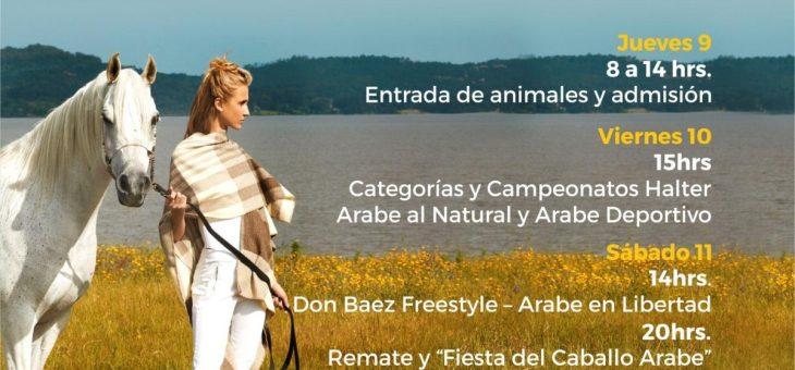 Semana Internacional del Caballo Árabe 2020